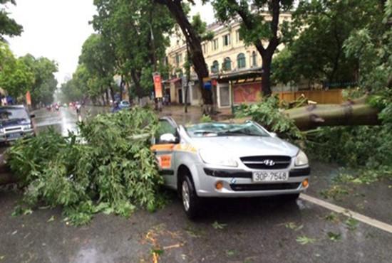 Bão số 1 càn quét ở Hà Nội, cây cối đổ la liệt - ảnh 1