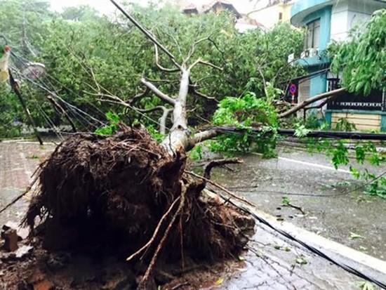 Bão số 1 càn quét ở Hà Nội, cây cối đổ la liệt - ảnh 8