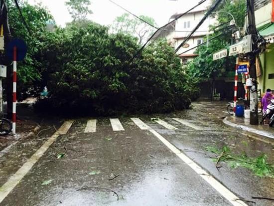 Bão số 1 càn quét ở Hà Nội, cây cối đổ la liệt - ảnh 9