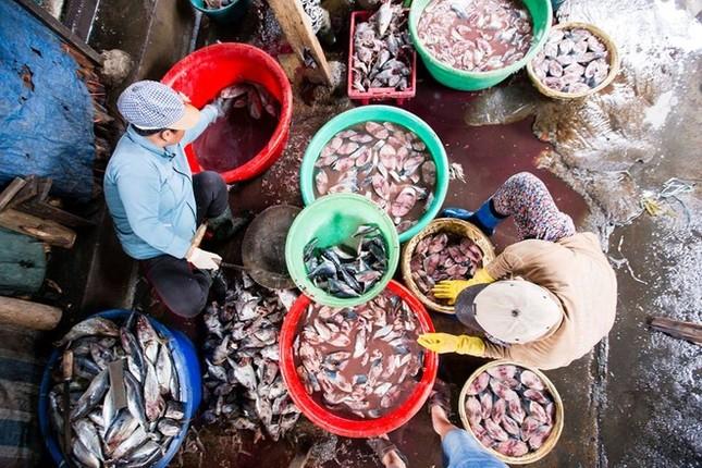 Làng nghề hấp cá ở Quy Nhơn - ảnh 2