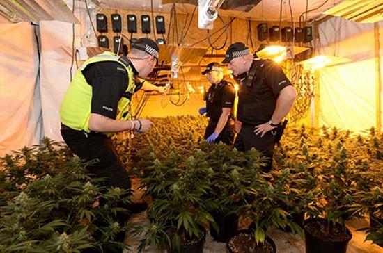Hai người Việt ở Anh ngồi tù vì làm việc trong trang trại cần sa - ảnh 1