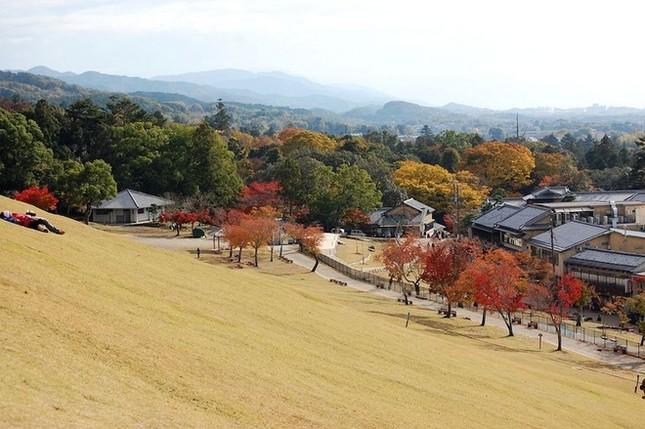 Lễ hội đốt nguyên một ngọn núi ở Nhật Bản - ảnh 8