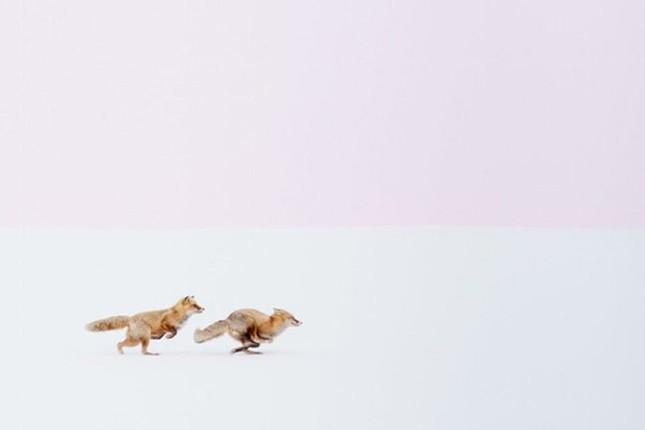 12 bức ảnh đẹp nhất được trao giải National Geographic 2016 - ảnh 3