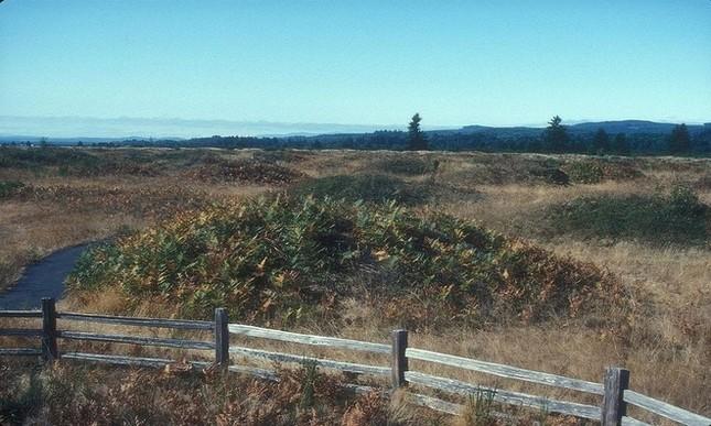 Những gò đất bí ẩn mọc san sát ở thảo nguyên nước Mỹ - ảnh 2