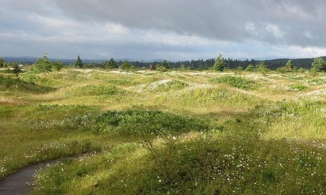 Những gò đất bí ẩn mọc san sát ở thảo nguyên nước Mỹ - ảnh 4