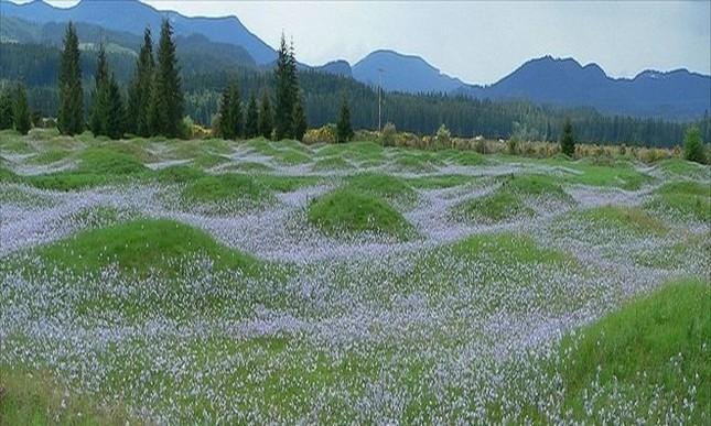 Những gò đất bí ẩn mọc san sát ở thảo nguyên nước Mỹ - ảnh 7