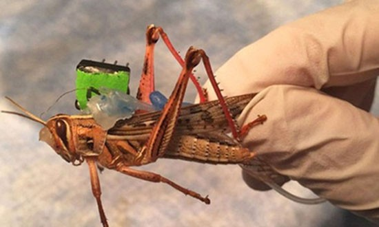 Hải quân Mỹ có thể dùng chiến sĩ côn trùng để dò bom - ảnh 1