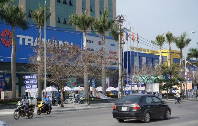 Nhiều cây xanh ở phố lớn Thanh Hóa chết khô, nghi bị đầu độc - ảnh 1