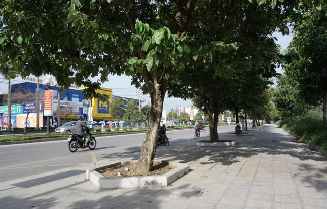 Nhiều cây xanh ở phố lớn Thanh Hóa chết khô, nghi bị đầu độc - ảnh 8