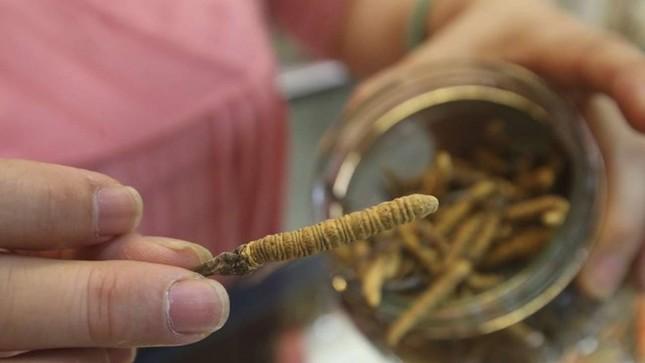 Đắt hơn vàng, đông trùng hạ thảo giả xuất hiện tràn lan - ảnh 1
