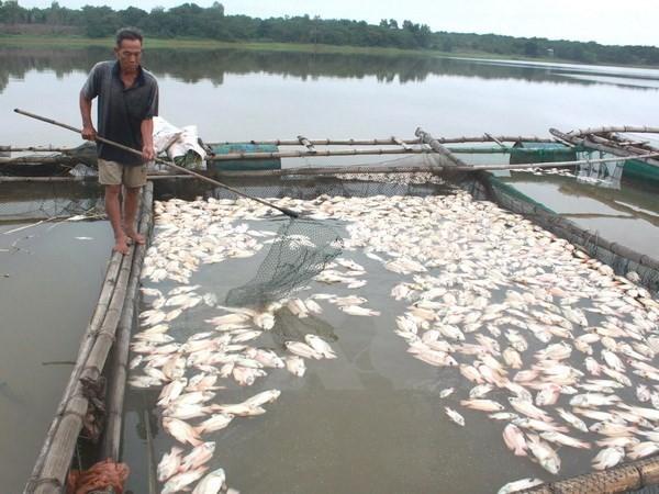 Cá chết nổi trắng sông An Cựu có thể do ô nhiễm hữu cơ cục bộ - ảnh 1