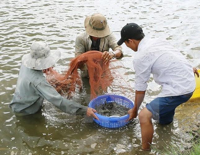 Xem xét khởi tố vụ giả giấy tờ kiểm định thức ăn thủy sản - ảnh 1