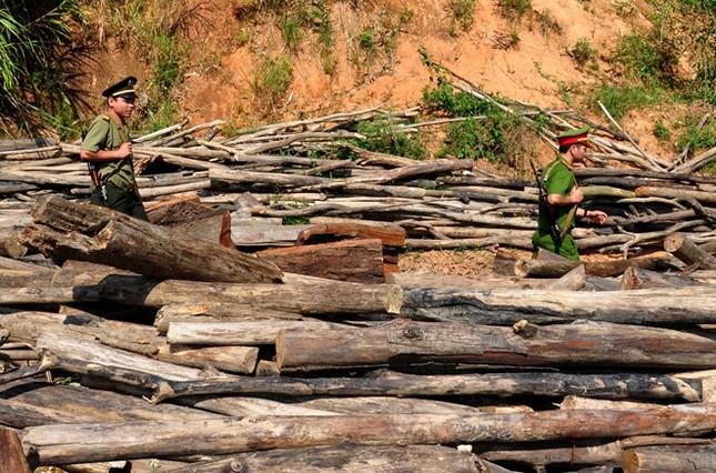 Mỗi ngày có một vụ phá rừng tại miền Trung - ảnh 2