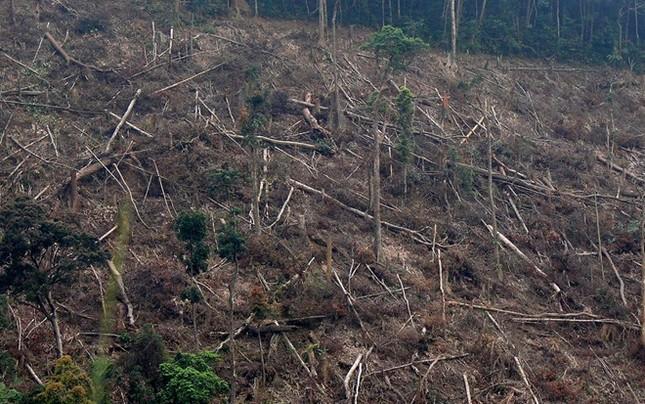 Mỗi ngày có một vụ phá rừng tại miền Trung - ảnh 1