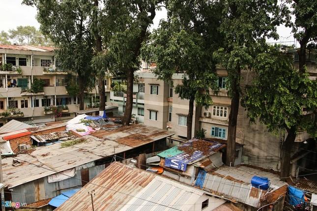 [ẢNH] Nhiều cây trăm tuổi ở Sài Gòn bị... nhốt vào nhà - ảnh 1