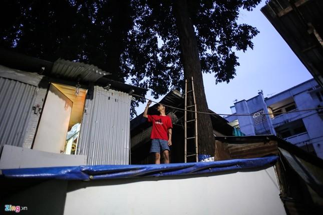 [ẢNH] Nhiều cây trăm tuổi ở Sài Gòn bị... nhốt vào nhà - ảnh 10