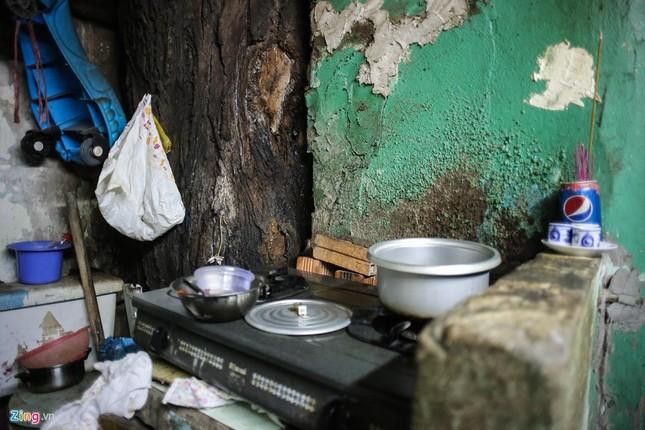 [ẢNH] Nhiều cây trăm tuổi ở Sài Gòn bị... nhốt vào nhà - ảnh 6