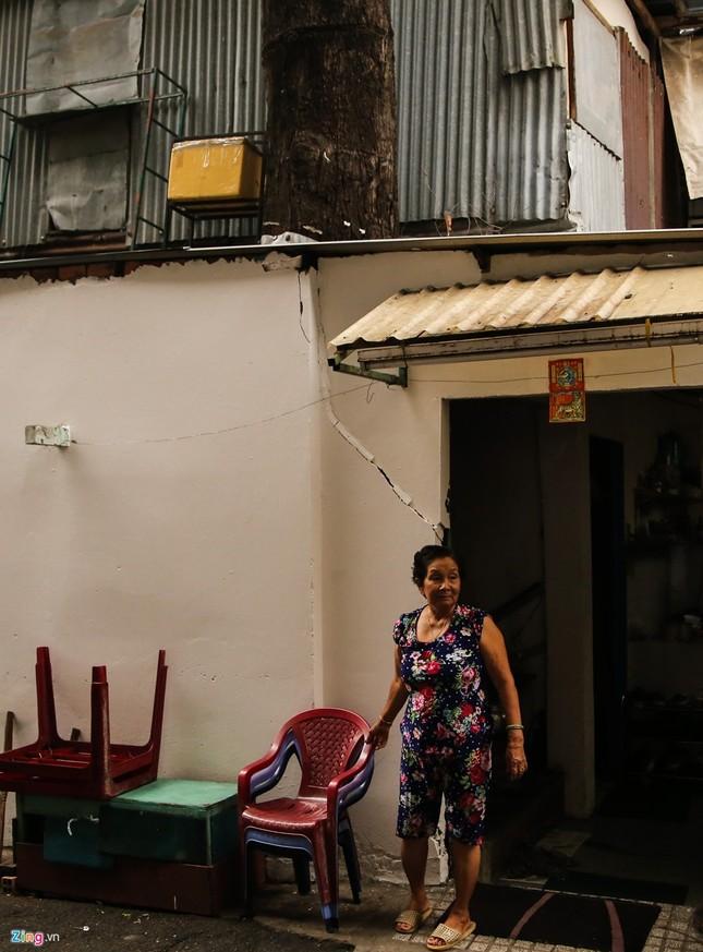 [ẢNH] Nhiều cây trăm tuổi ở Sài Gòn bị... nhốt vào nhà - ảnh 2