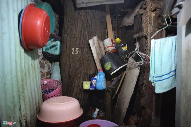 [ẢNH] Nhiều cây trăm tuổi ở Sài Gòn bị... nhốt vào nhà - ảnh 8
