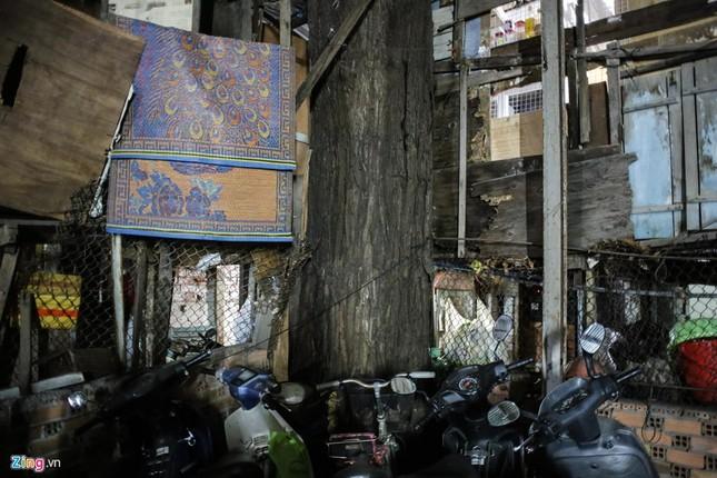 [ẢNH] Nhiều cây trăm tuổi ở Sài Gòn bị... nhốt vào nhà - ảnh 13