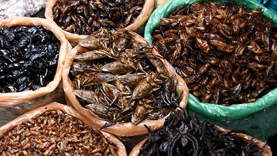 Nhiều ca ngộ độc do ăn côn trùng - ảnh 1