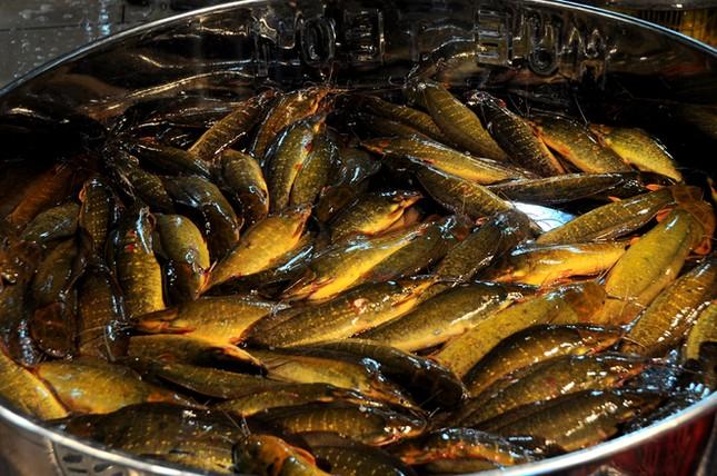 Chợ cá tươi rói ở Sài Gòn chỉ bán vào ban đêm - ảnh 4