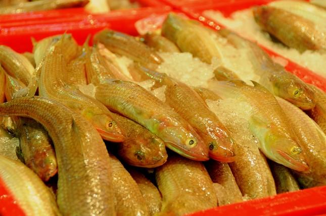 Chợ cá tươi rói ở Sài Gòn chỉ bán vào ban đêm - ảnh 9