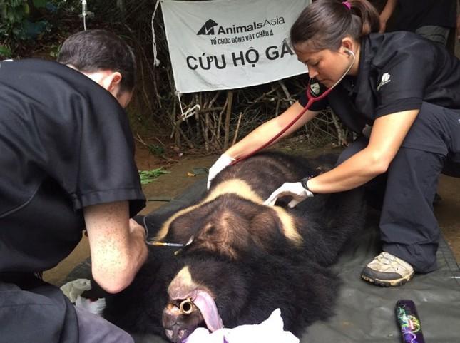 Gấu ngựa được cứu hộ sau hơn một thập kỷ trong lồng sắt - ảnh 6