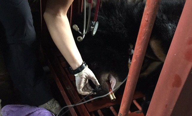 Gấu ngựa được cứu hộ sau hơn một thập kỷ trong lồng sắt - ảnh 8