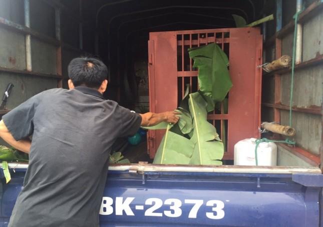 Gấu ngựa được cứu hộ sau hơn một thập kỷ trong lồng sắt - ảnh 9