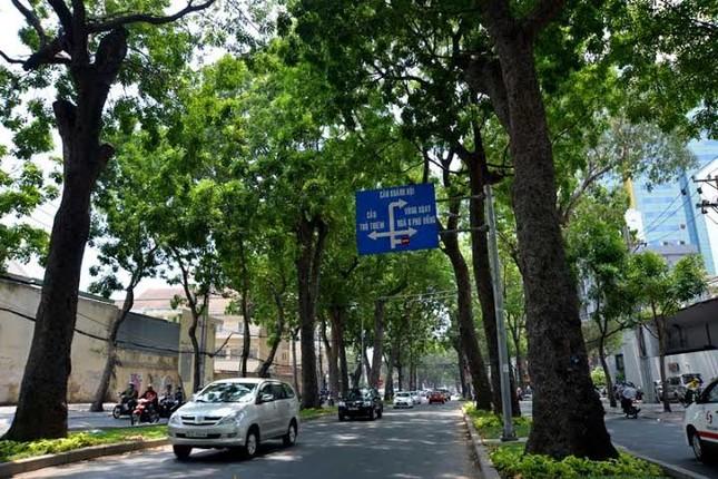 'Chốt' phương án chặt cây đường Tôn Đức Thắng để làm ga metro - ảnh 1
