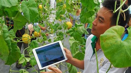 Internet kiểm soát nông sản sạch - ảnh 1