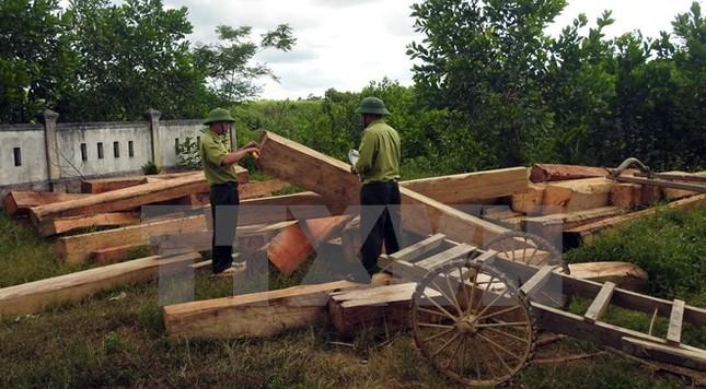 Rừng ở Vĩnh Linh bị chặt phá nghiêm trọng do buông lỏng quản lý - ảnh 1