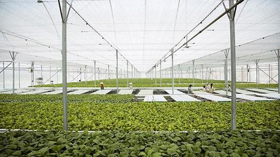 Vingroup liên kết 1000 HTX và hộ nông dân cung ứng nông sản sạch  - ảnh 1