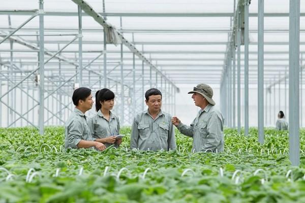 Vingroup liên kết 1000 HTX và hộ nông dân cung ứng nông sản sạch  - ảnh 4