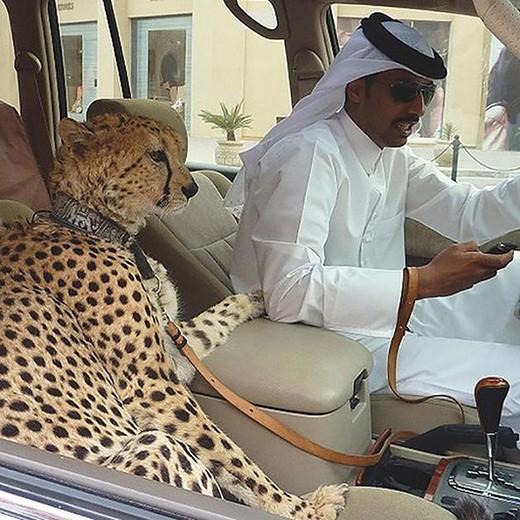 """Cuộc sống """"điên rồ"""" ở Dubai - anh 1"""