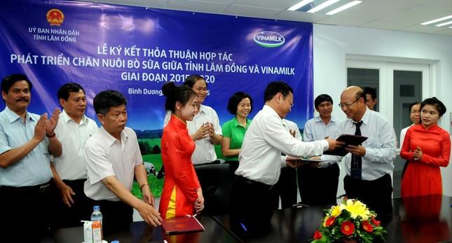 Vinamilk hợp tác phát triển chăn nuôi bò sữa tại Lâm Đồng - anh 1