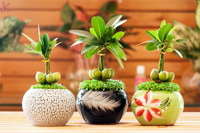 5 quy tắc đặt cây cảnh trên bàn làm việc giúp tăng tài lộc, thịnh vượng - anh 1