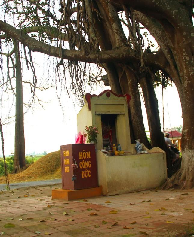 Chuyện kỳ bí về cây đa di sản hơn 200 tuổi nổi tiếng Phú Xuyên - anh 5