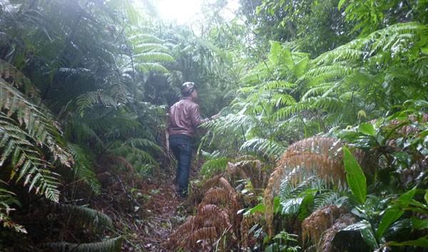 """Kỳ bí khu rừng thiêng """"bất khả xâm phạm"""" ở Quảng Nam - anh 1"""