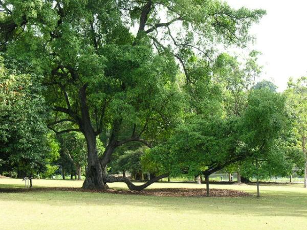 UNESCO vinh danh Vườn thực vật Singapore là di sản thế giới - anh 1