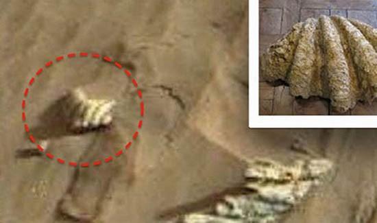 NASA phát hiện hình ảnh vỏ ngao trên sao Hỏa? - ảnh 1