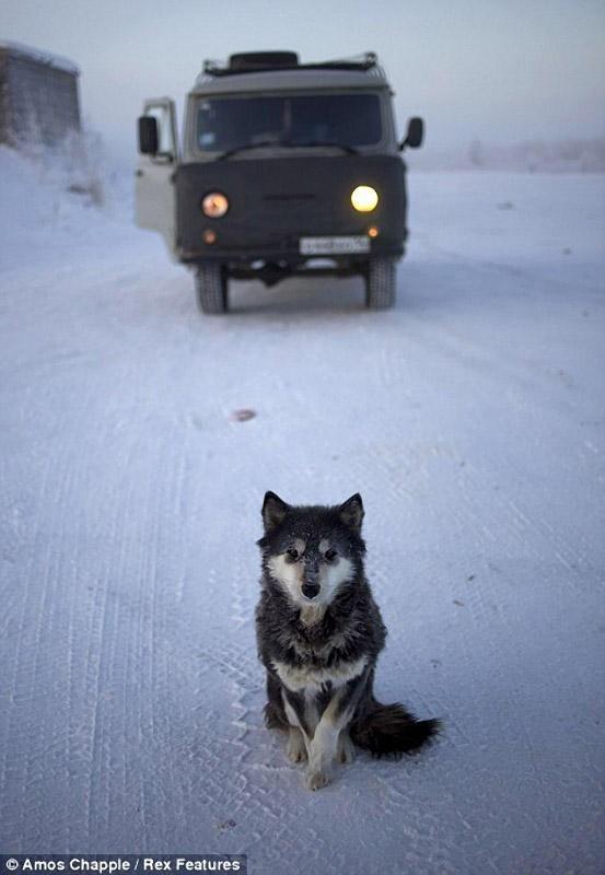 Khám phá cuộc sống tại ngôi làng lạnh nhất thế giới ở Nga - ảnh 4