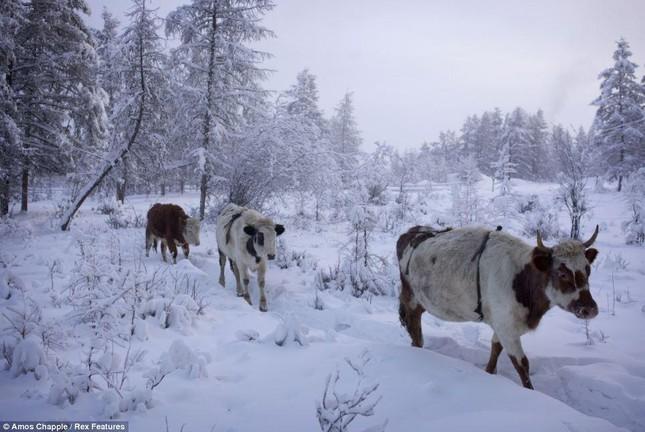 Khám phá cuộc sống tại ngôi làng lạnh nhất thế giới ở Nga - ảnh 8