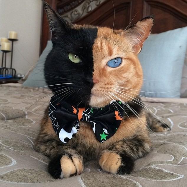 Chú mèo hai mặt độc đáo thu hút hàng triệu fan trên Facebook - ảnh 3