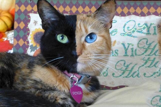 Chú mèo hai mặt độc đáo thu hút hàng triệu fan trên Facebook - ảnh 4