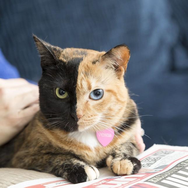 Chú mèo hai mặt độc đáo thu hút hàng triệu fan trên Facebook - ảnh 5