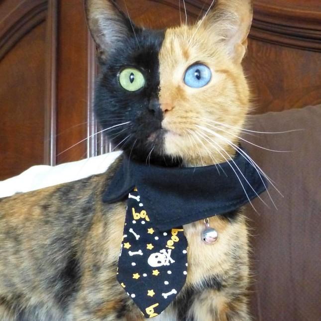 Chú mèo hai mặt độc đáo thu hút hàng triệu fan trên Facebook - ảnh 6