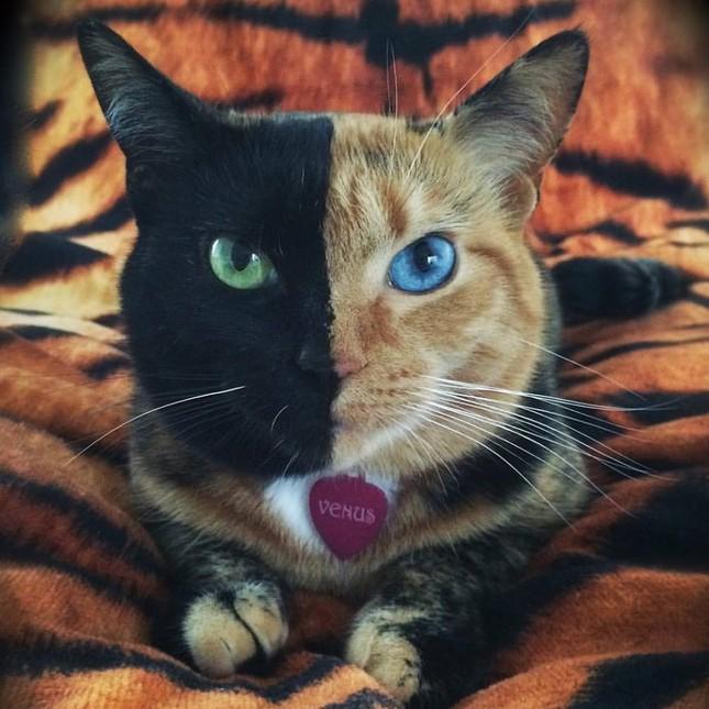 Chú mèo hai mặt độc đáo thu hút hàng triệu fan trên Facebook - ảnh 8