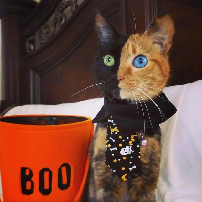 Chú mèo hai mặt độc đáo thu hút hàng triệu fan trên Facebook - ảnh 9